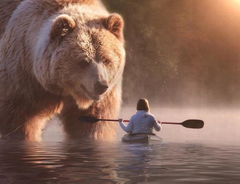 giant animal photoshops - Brown bear