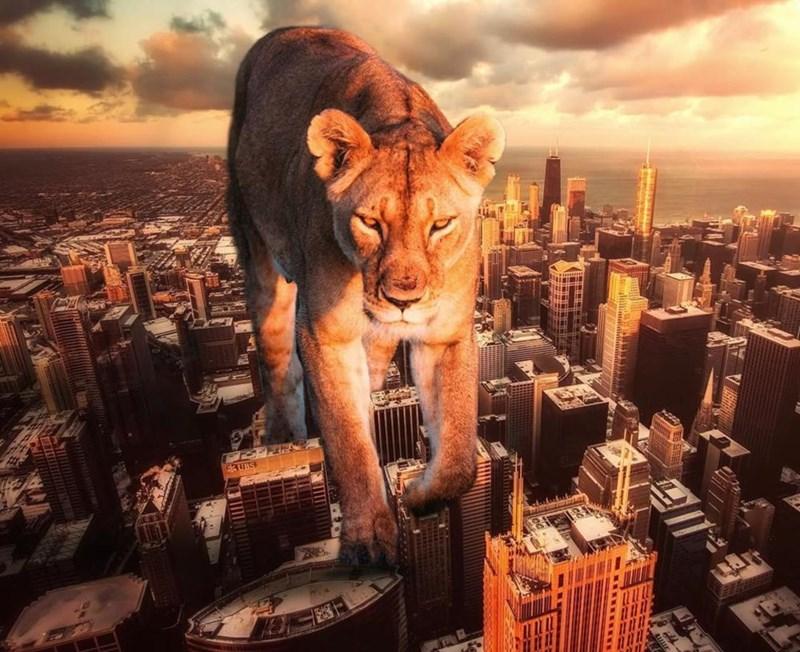 giant animal photoshops - Sky