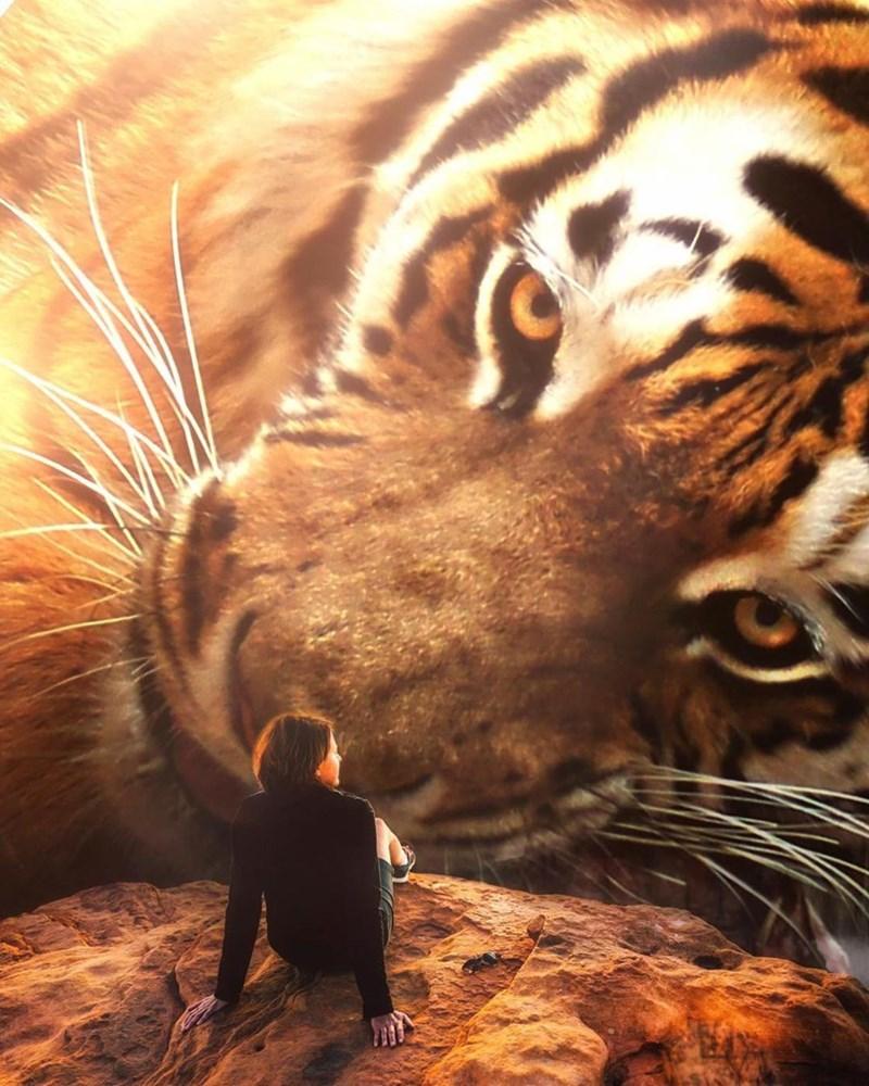 giant animal photoshops - Tiger