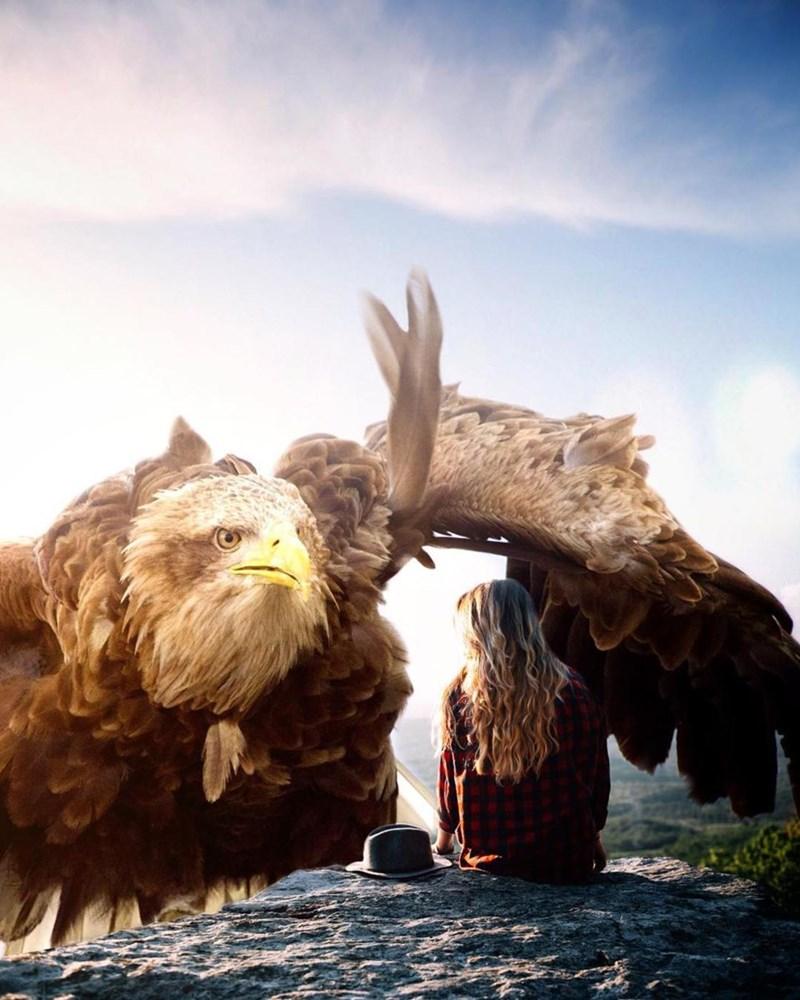 giant animal photoshops - Eagle