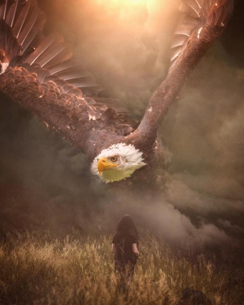 giant animal photoshops - Bird of prey