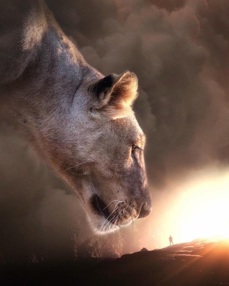 giant animal photoshops - Wildlife