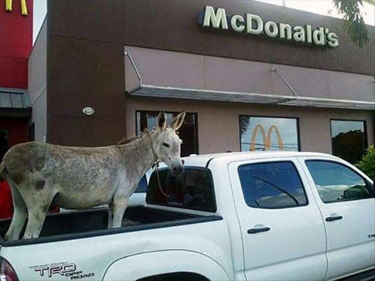 Vehicle - McDonald's TRO reDAD