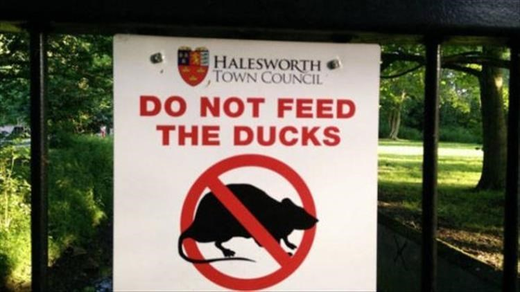 Sign - HALESWORTH TOWN COUNCIL DO NOT FEED THE DUCKS