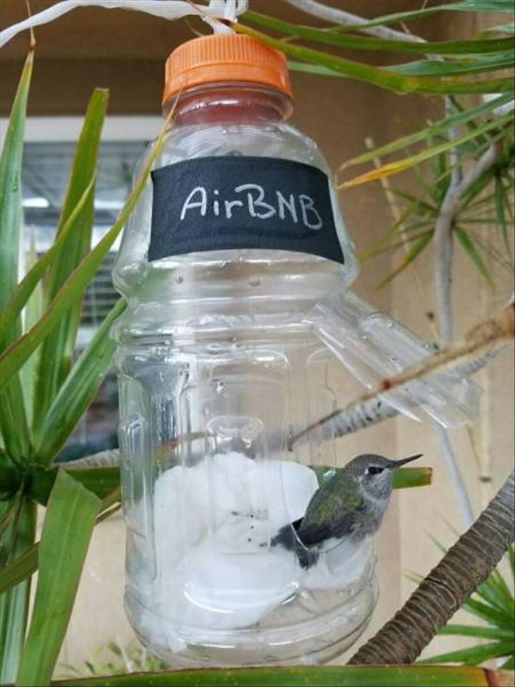 Bird feeder - AirBNB