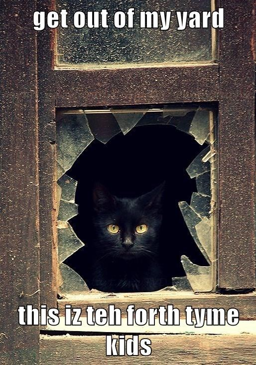 Black cat - get out of my yard this iz teh forth tyme kids