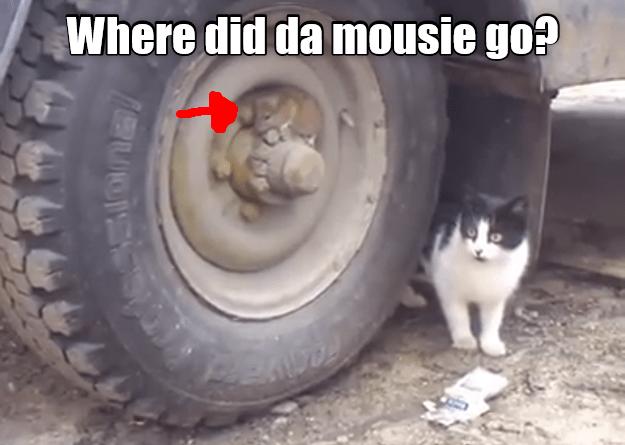 Tire - Where did da mousie go?
