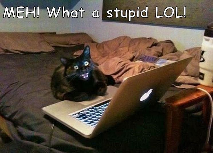 Cat - MEH! What a stupid LOL!