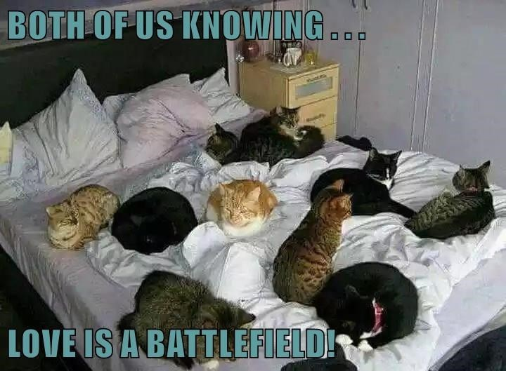 Room - BOTH OF US KNOWING OO0 LOVE IS A BATTLEFIELD