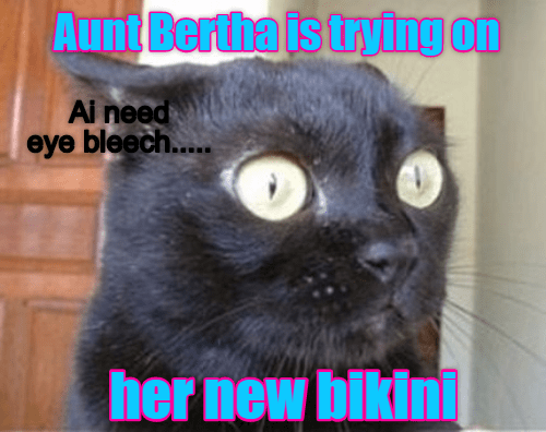Cat - Aunt Bertha is trying on Ai need eye bleech..... her new bikini