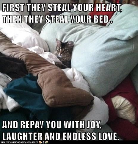 bed cat memes - 9084214528