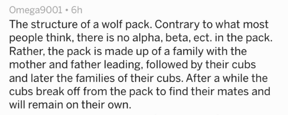 Text The structure of a wolf pack. Contrary to what most people think, there is no alpha, beta, ect. in the pack. Rather, the pack is made up of a family with the mother and father leading, followed by their cubs and later the families of their cubs. After a while the cubs break off from the pack to find their mates and will remain on their own