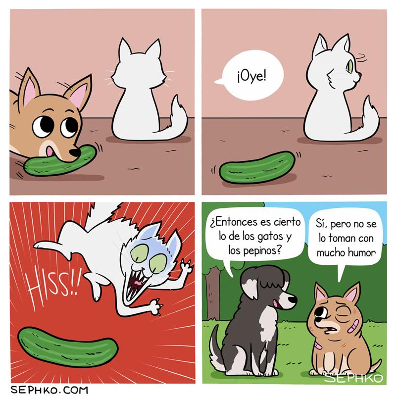 los gatos le tienen miedo a los pepinos