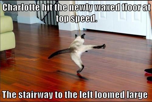 cat slippery cat memes waxed floor - 9084867072