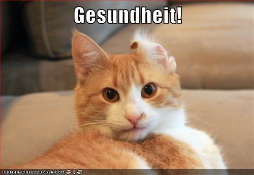 sneeze cat memes ears - 9084922880