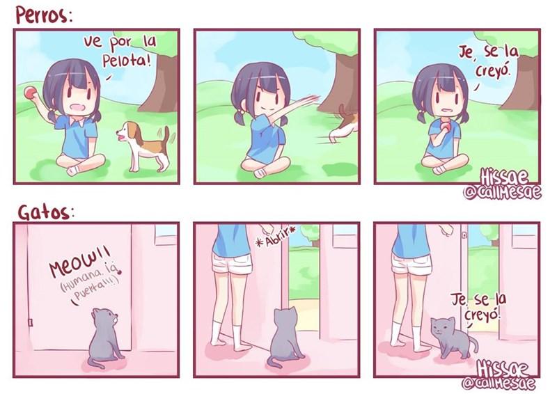 perros y gatos diferencia en un comic de CallMeSae