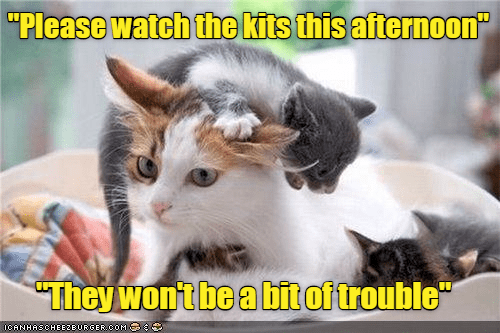 """cat meme - Cat - """"Please watch the kits this afternoon"""" """"They won't be a bit of trouble ICANHASCHEEZEURGER COM"""