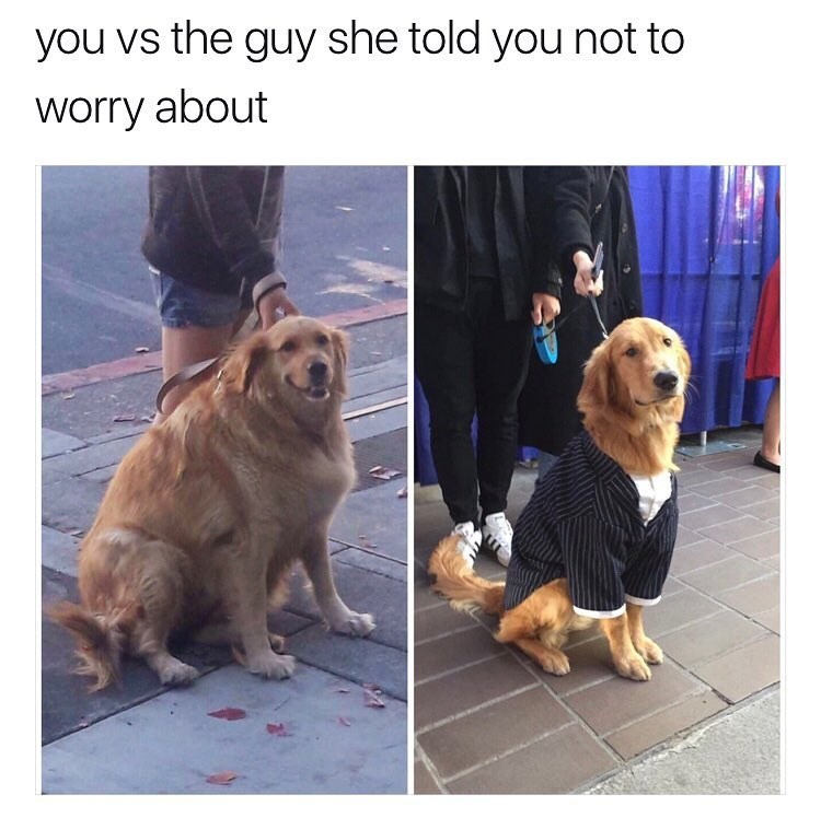 dog meme about being jealous of a better looking guy