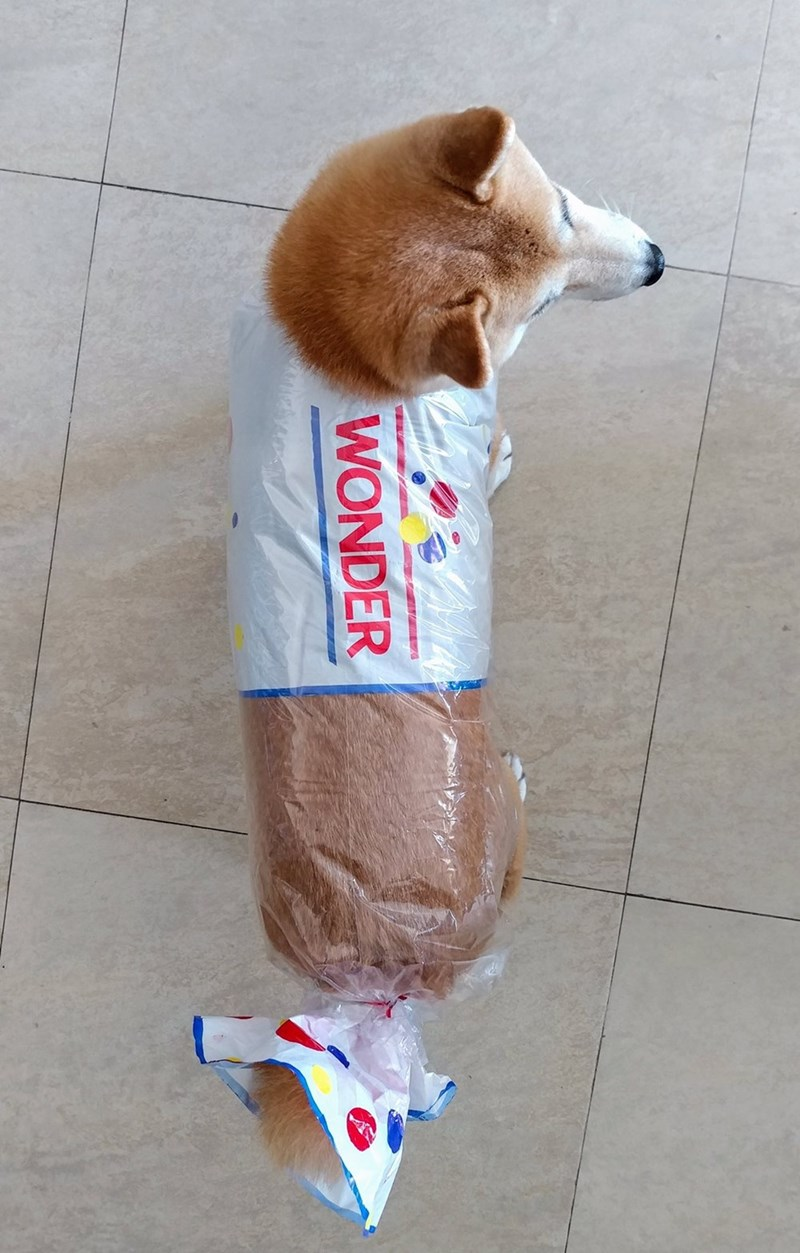 doggo meme with pic of Shiba Inu in Wonderbread wrapping paper