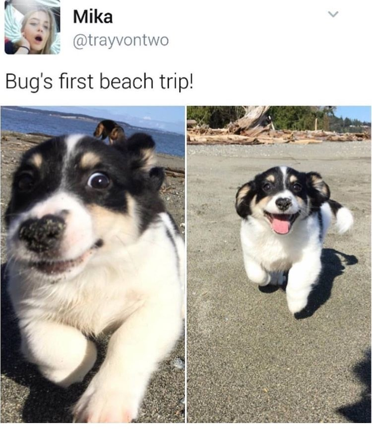 dog meme with pics of puppy excitedly visiting the beach