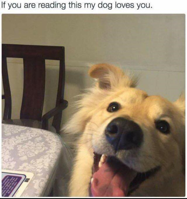 dog meme with pic of happy dog full of love