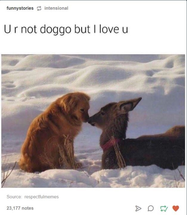 dog meme about love between a dog and a deer