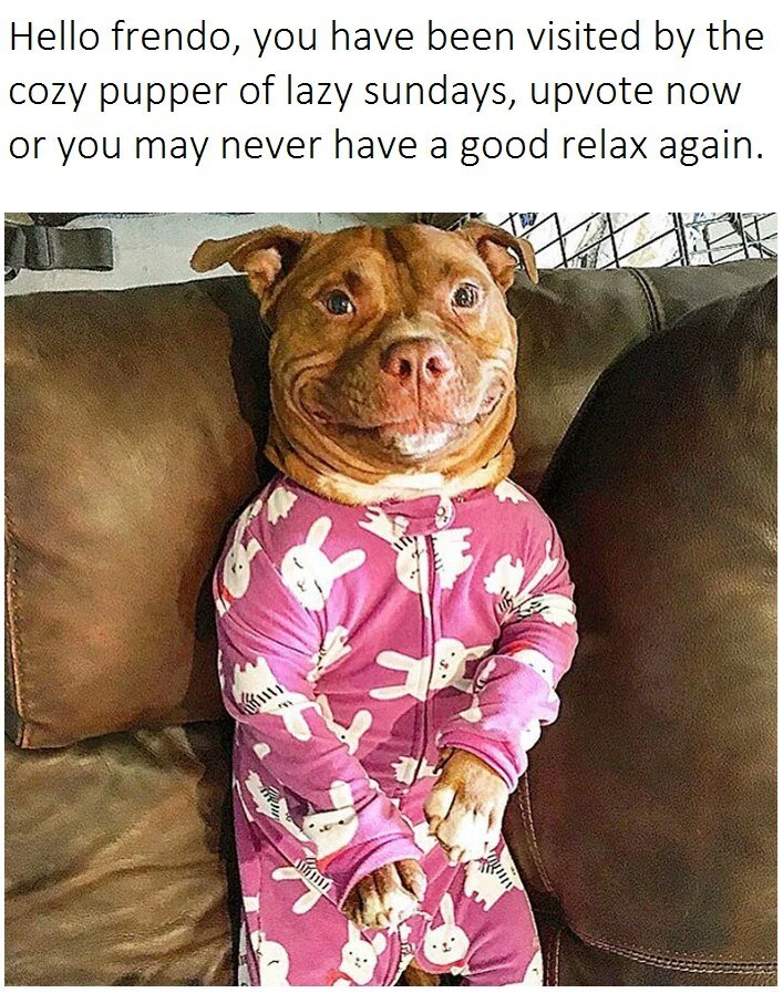dog meme about relaxing at home with pic of dog dressed in pink onesie