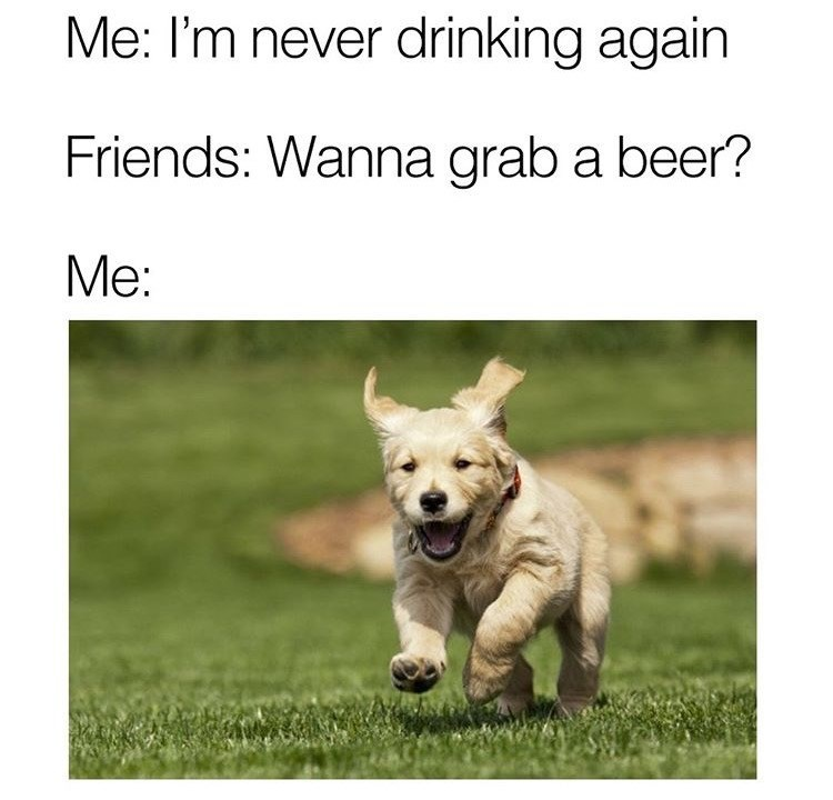 dog meme about swearing off drinking but running to the bar the moment you're asked