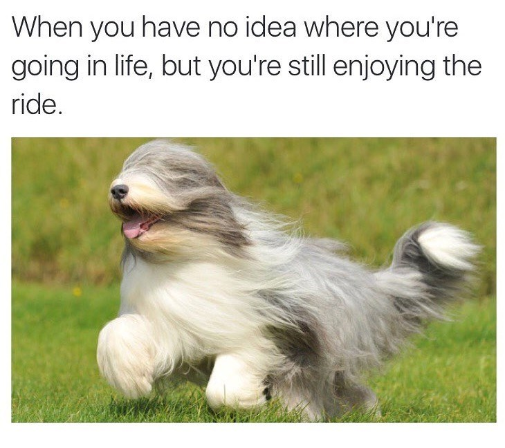 dog meme about going with the flow with pic of dog with long bangs running blindly
