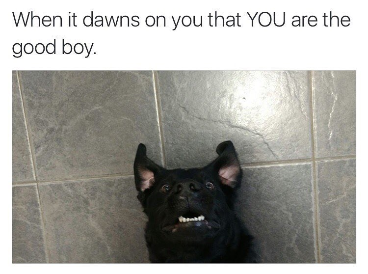 dog meme about realizing you're a good boy with pic of dog staring ahead in shock