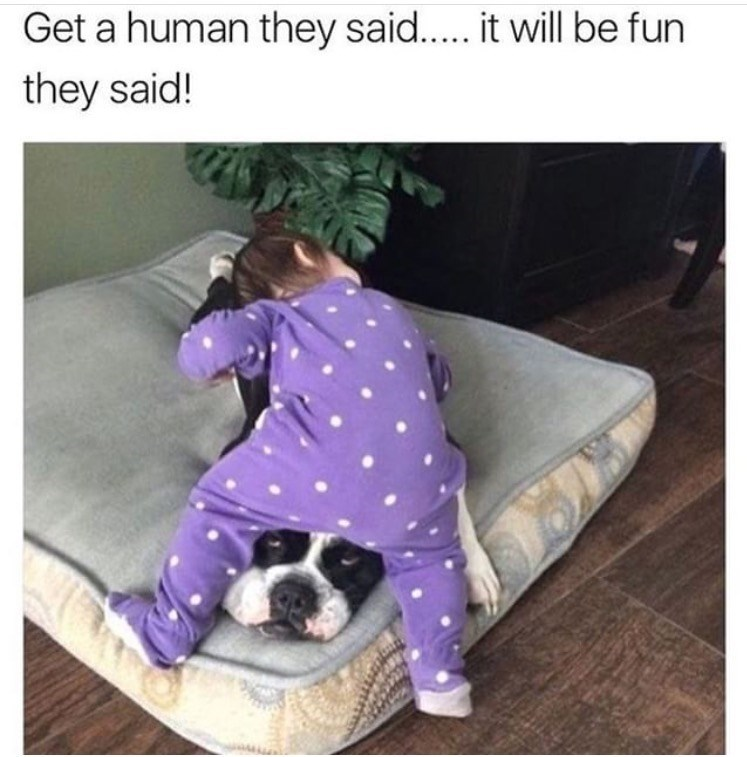 dog meme about dealing with humans with pic of dog squashed by baby