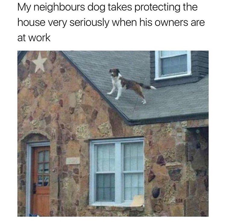 dog meme about going overboard protecting the house with pic of dog standing on a roof