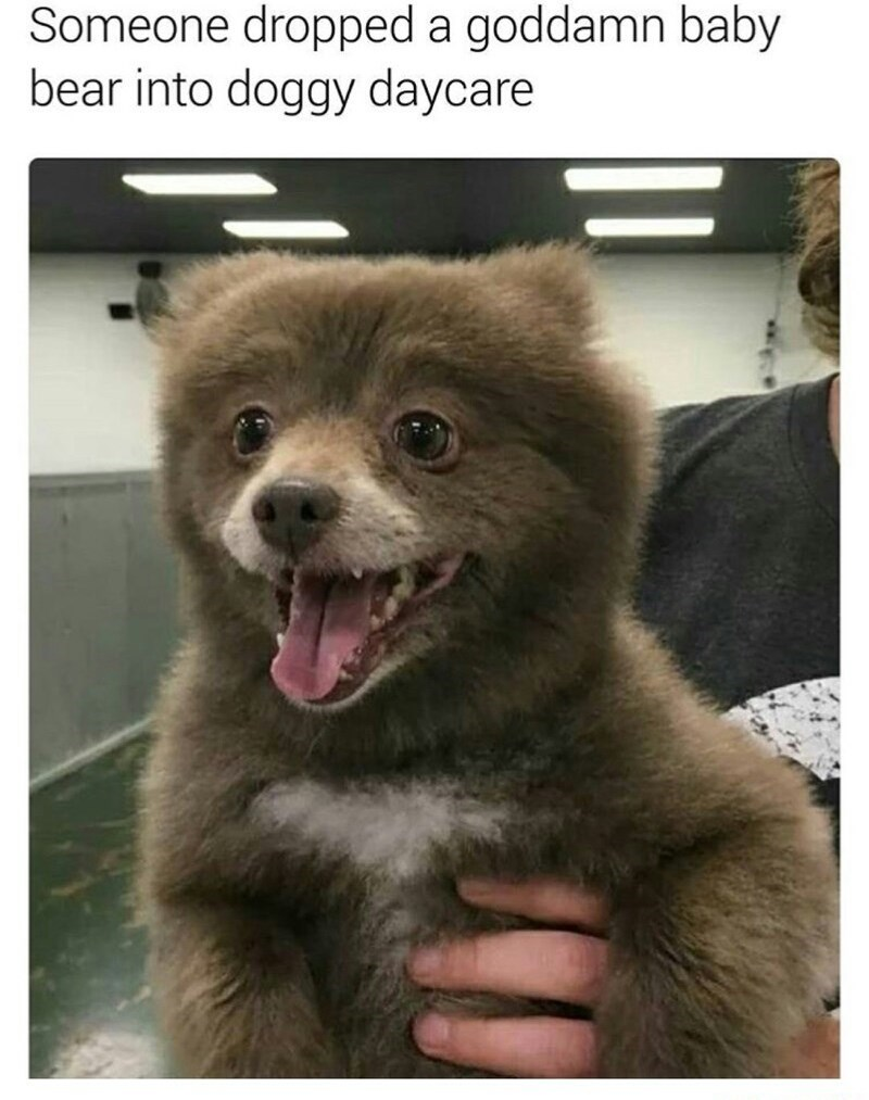 dog meme with pic of brown fuzzy puppy that looks like a bear