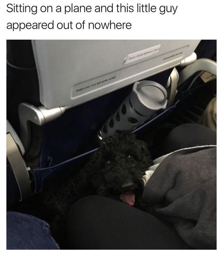 dog meme about finding a surprise on a plane with pic of dog peeking from under a seat