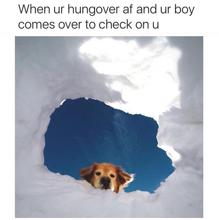 dog meme about getting checked on by your dog with pic of dog peeking down from hole