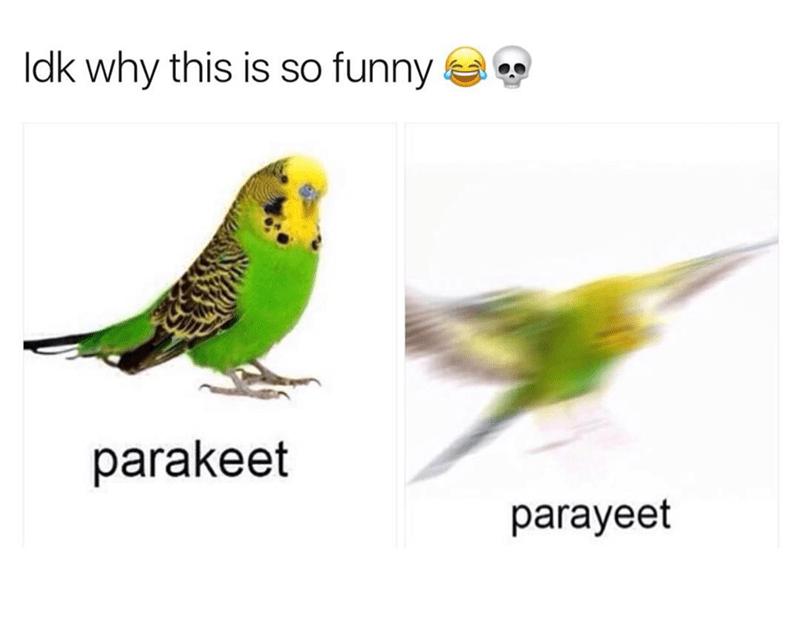 Blurry parakeet meme