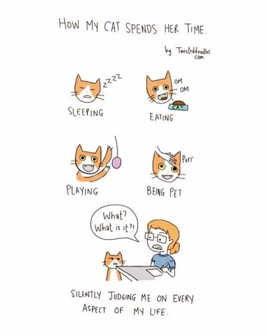 Text - How My CAT SPENDS HER TIME by Twisteddeodes Com OM OM SLEEPING EATING Perr PLAYING BEING PET What? What is it SILENTLY JUDGING ME ON EVERY ASPECT OF MY UFE