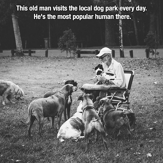 Canidae - This old man visits the local dog park every day. He's the most popular human there.