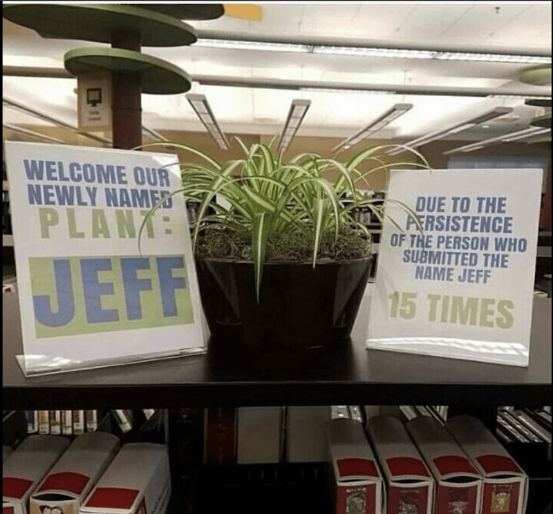 Funny meme of a plant named Jeff in the office