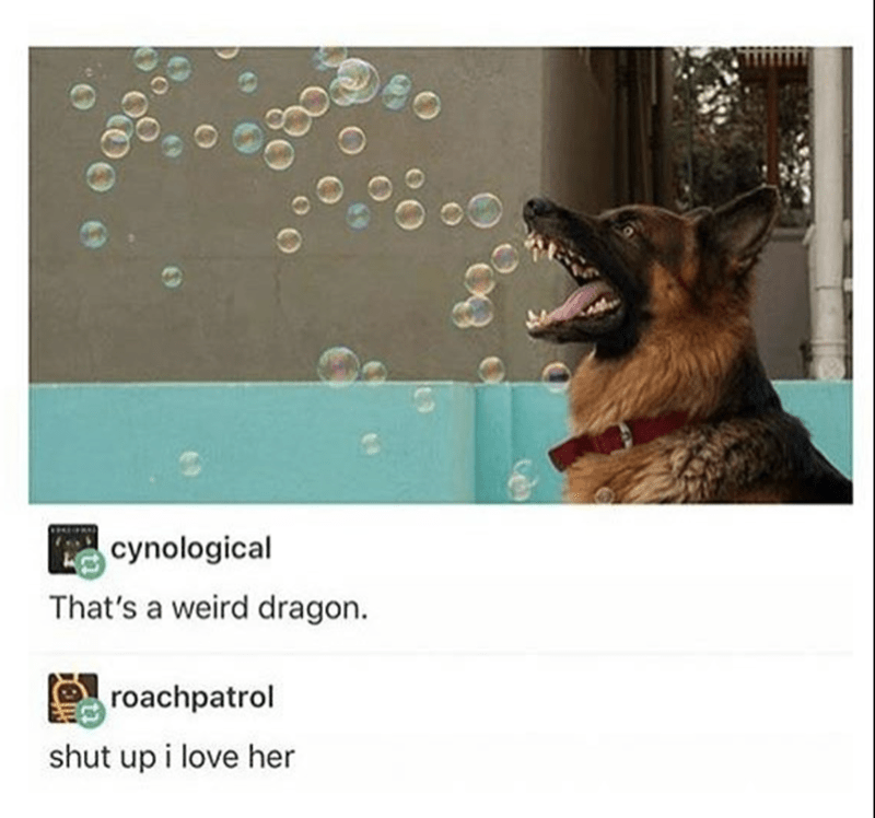 Funny meme of dog with bubbles that looks like a silly dragon.
