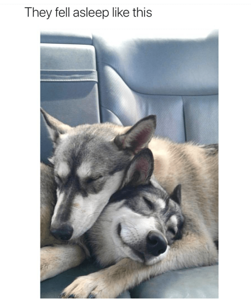 dogs that fell asleep adorably on each other