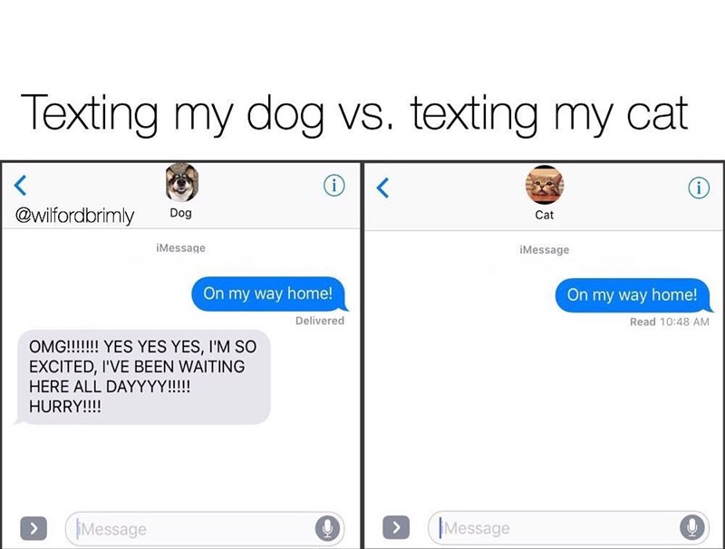 Funny meme about how differently cats and dogs would respond to your text.