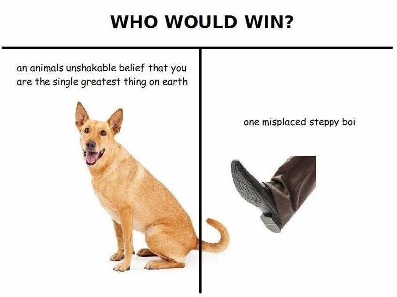 dank meme about accidentally stepping on your dog's tail