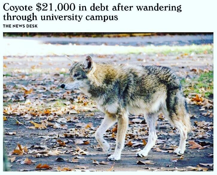 dank meme about college being so expensive even an animal passing through it gets in debt
