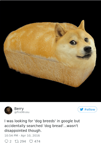 Canidae - Berry @PinkMiruku Follow I was looking for 'dog breeds' in google but accidentally searched 'dog bread...wasn't disappointed though 10:54 PM Apr 10, 2016 2 t 294 474