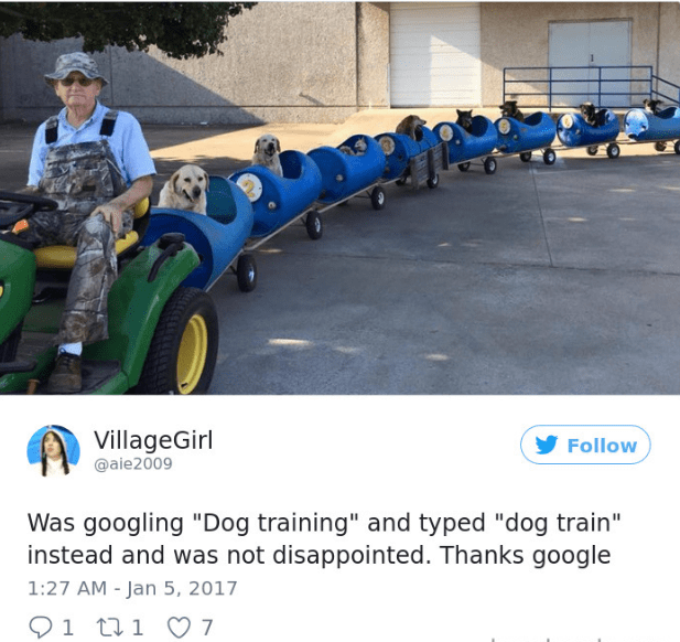 """Product - VillageGirl Follow @aie2009 Was googling """"Dog training"""" and typed """"dog train"""" instead and was not disappointed. Thanks google 1:27 AM - Jan 5, 2017 1 t1 7"""