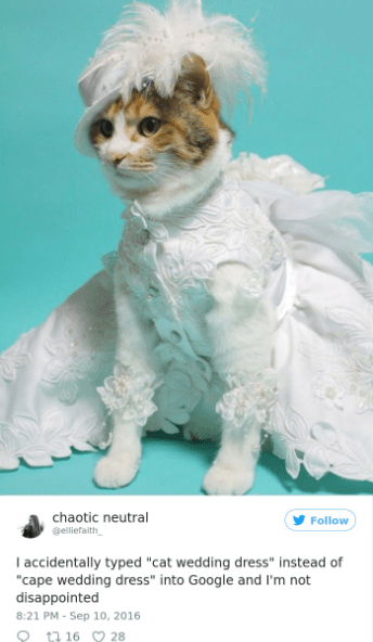 """Cat - chaotic neutral Follow @elliefaith I accidentally typed """"cat wedding dress"""" instead of """"cape wedding dress"""" into Google and I'm not disappointed 8:21 PM - Sep 10, 2016 ta 16 28"""