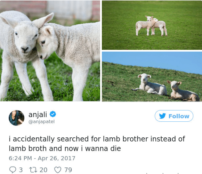 Sheep - anjali @anjapatel Follow i accidentally searched for lamb brother instead of lamb broth and now i wanna die 6:24 PM - Apr 26, 2017 79 3 20