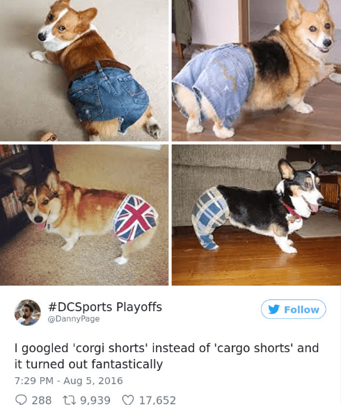 Dog - #DCSports Playoffs DannyPage Follow I googled 'corgi shorts' instead of 'cargo shorts' and it turned out fantastically 7:29 PM - Aug 5, 2016 288 9,939 17,652