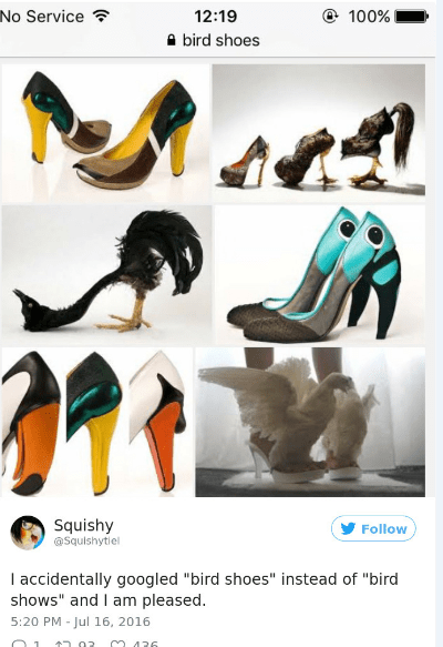 """Footwear - No Service 12:19 100% bird shoes Squishy @Squishytiel Follow I accidentally googled """"bird shoes"""" instead of """"bird shows"""" and I am pleased 5:20 PM - Jul 16, 2016 .02 426"""